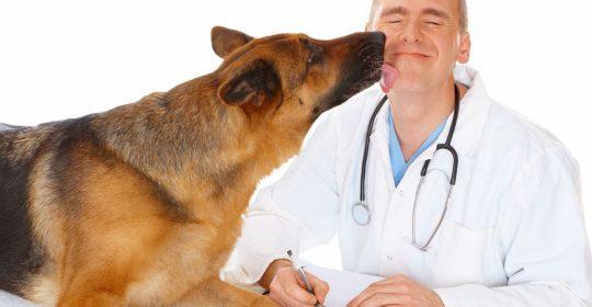 Регистрация ветеринарных препаратов